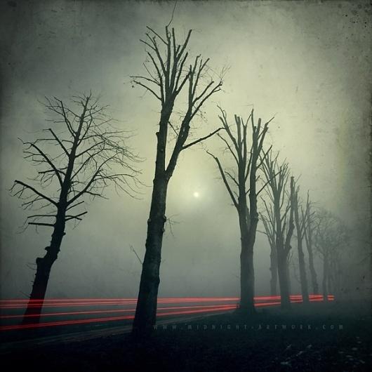 Photos | Midnight-Artwork #forest #fog
