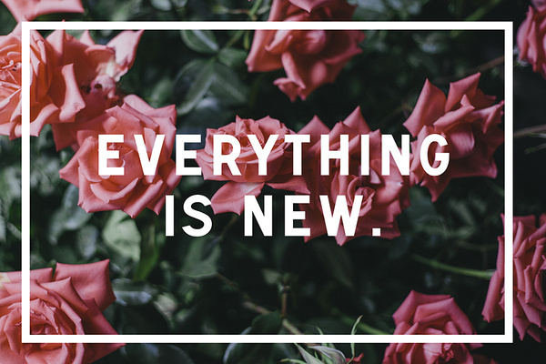 Everything is new. #new #davis #carson #signal #is #urw #photography #brown #everything #typography