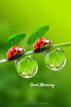 473 Best good morning photos by sonusunariya | HappyShappy