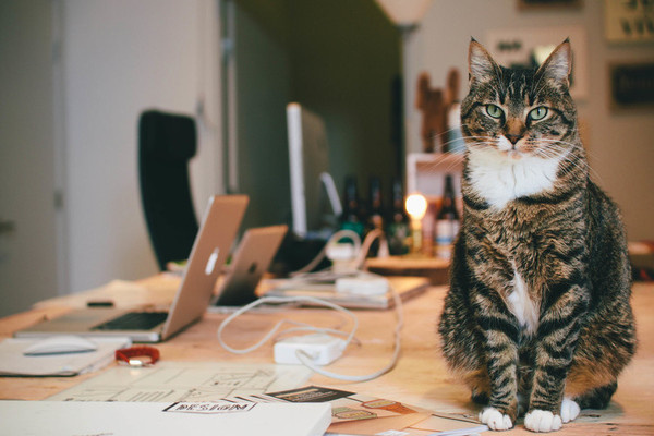 IMG_9177.jpg #photo #office #cat #photograph #photography #workspace #vsco