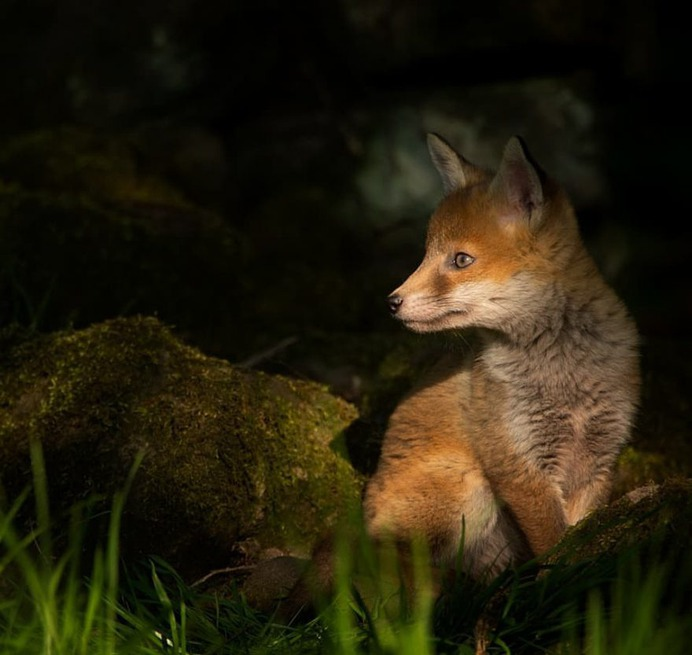 Stunning Photographs of Wild Animals by Andy Parkinson