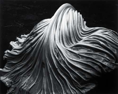 nonclickableitem #postive #white #negative #black #space #cabbage #photography #shape #and