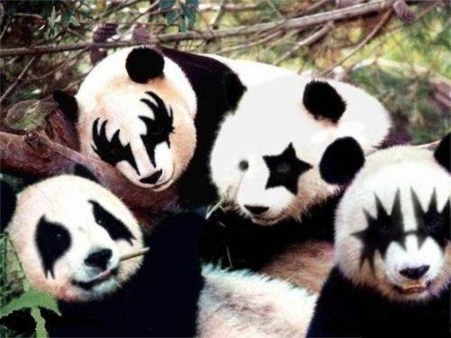 the Whoa! #bear #panda #kiss