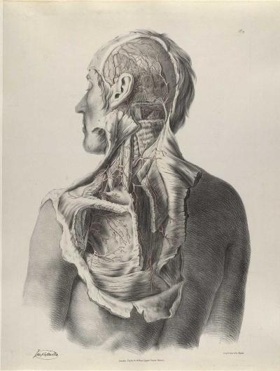 quain_p19.jpg 1200×1587 pixels #dissection #drawing #anatomy