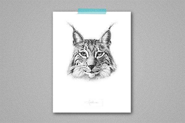 Lynx Lynx, by Cecilia Hedin #wild #woods #cat #lynx #forest #animal