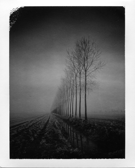 Tree Lined, photography by Pierre Pellegrini. In Nature, Vegetal, Tree, forest. Tree Lined, photography by Pierre Pellegrini. Image #258720