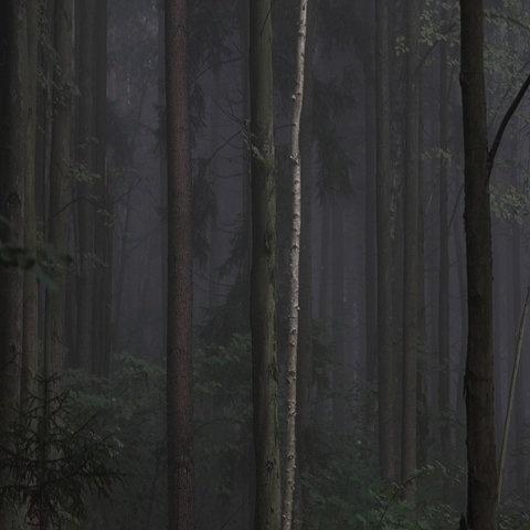 FFFFOUND! #trunk #photography #forest #dark #leaves
