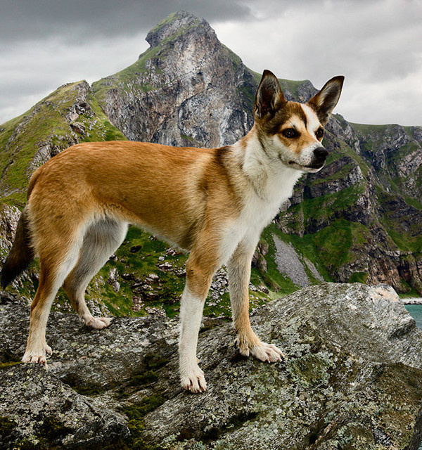 Dogs Photography by Andrew Fladeboe #inspiration #photography #animal