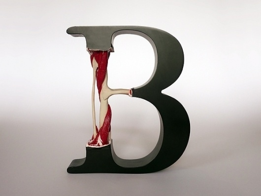 Evolution of Type, Exhibits 6-9 & 12 on the Behance Network #surgery #bone #letterform #type #typography