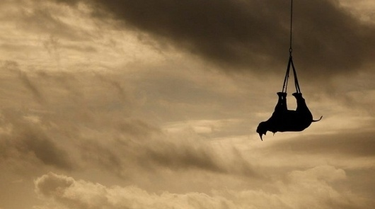Amazing Photos Of A Rhino Being Airlifted #rhino #animal