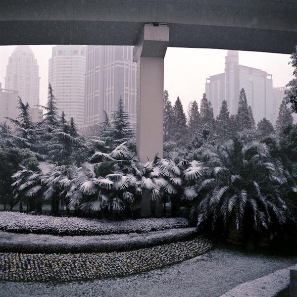 project, cina. alberto sinigaglia photographer. #plants #city #snow #china #street