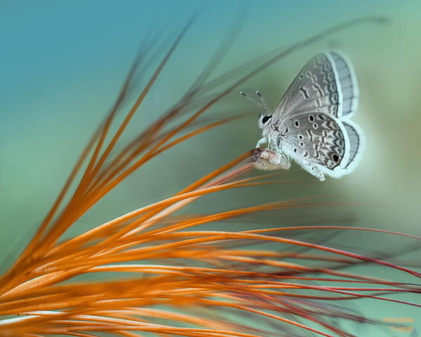 Charming Butterfly #butterfly