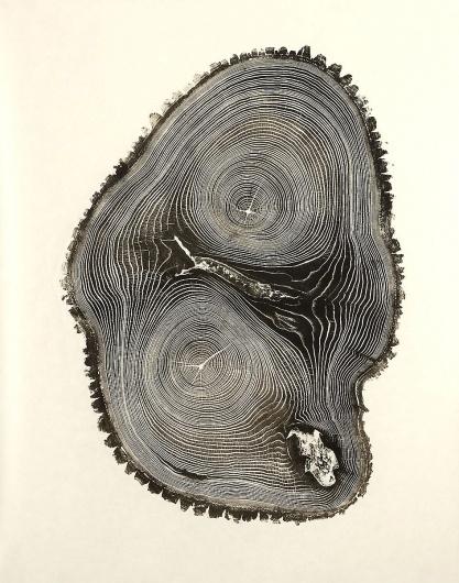 bryan_nash_gill_01.jpg (946×1200) #woodcut #trunk