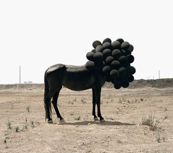 Andrea Galvani (2) #balloon #horse #black