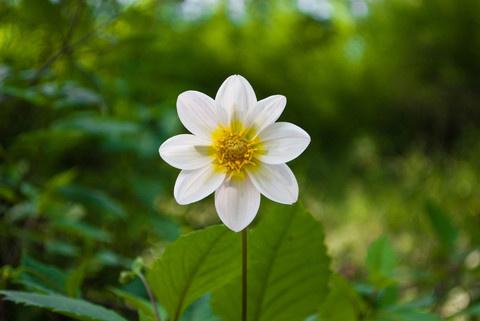 IG064 #flower #nature