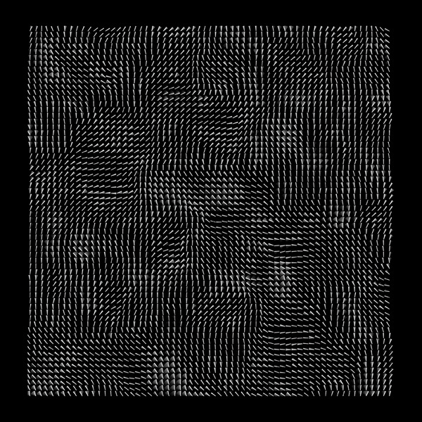 FlowField #processing #generative #code #art