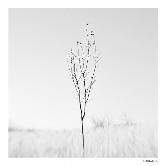 lensbaby tree, Artwork by Adrian Rosu #lensbaby