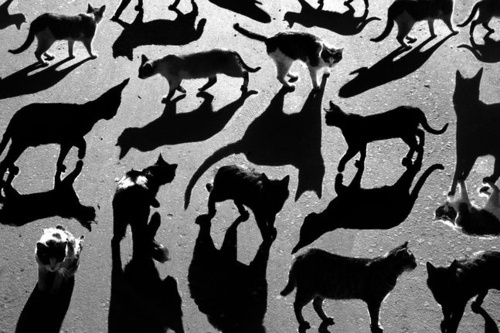 DeadFix » cats #shadows #kitties #cats