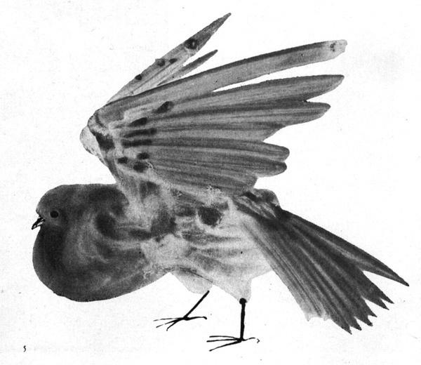 Józef Wilkoń #illustration #watercolour #bird