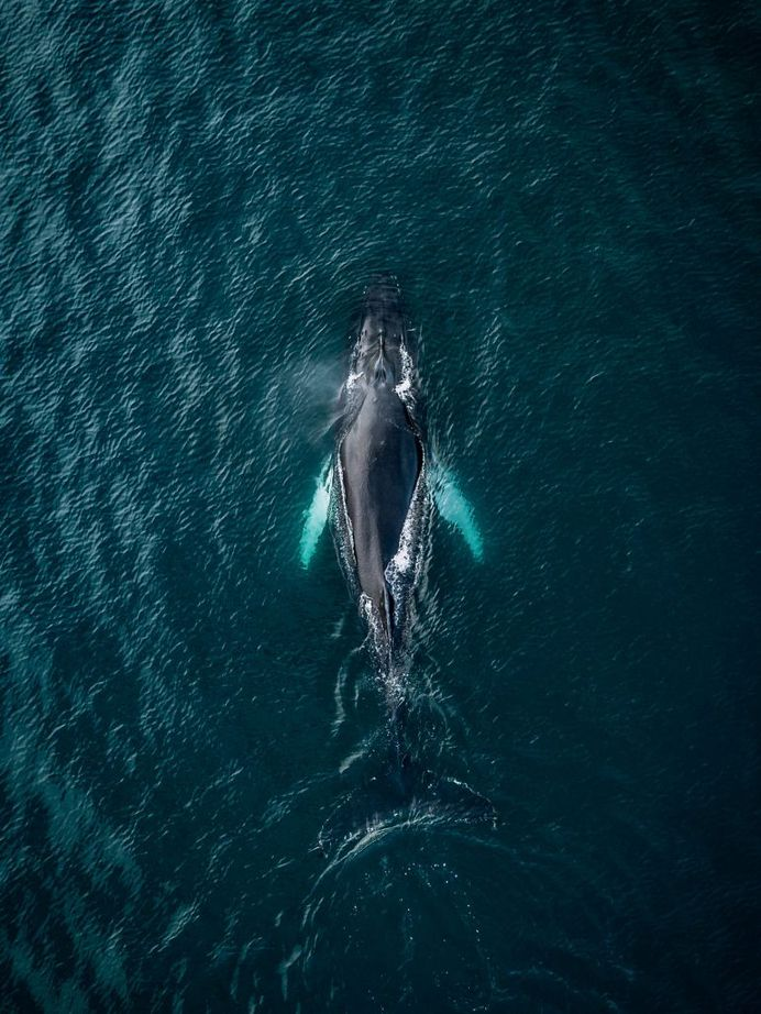 Whales from above by Michael Schauer
