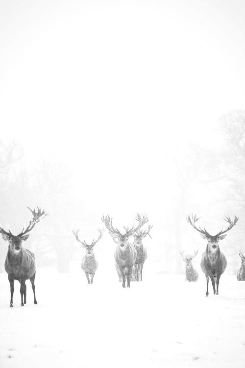 Winter Beauty. #deer #photography #snow #winter