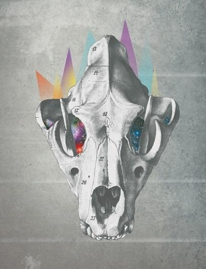 david▲fallow on the Behance Network #geometria #geometry #esqueleto #fallow #skull #david