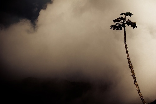 Quique Cabanillas Photograhy Blogfolio #fog #smoke #tree #photography #mountains #plant
