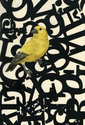 Buamai - Untitled #design #graphic #bird #poster #typography