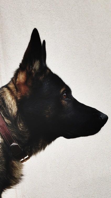 nerv #dog
