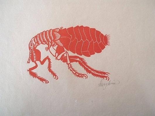 artnet Galleries: Flea by Leonard Baskin from Kornelia Tamm Fine Arts