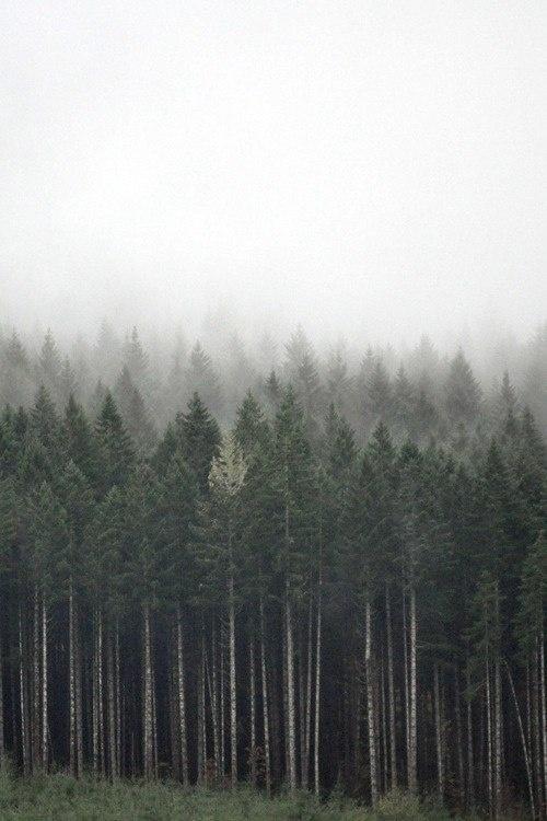 forrest #fog #forrest #earth #photography #nature