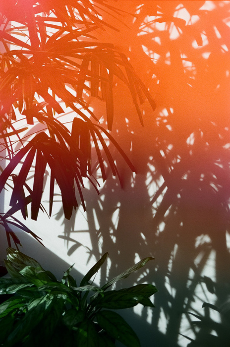 Photography #photography #palm #tree