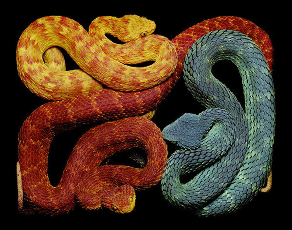 Eight Hour Day » Blog » The Best Thing I Saw Today • April 12, 2012 #snakes