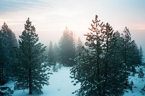 the Sea-Farer #fog #sky #snow #calm #natutre #pine #winter