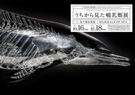 Composition of Mammals   Fubiz™ #photography #design #graphic #ilustration