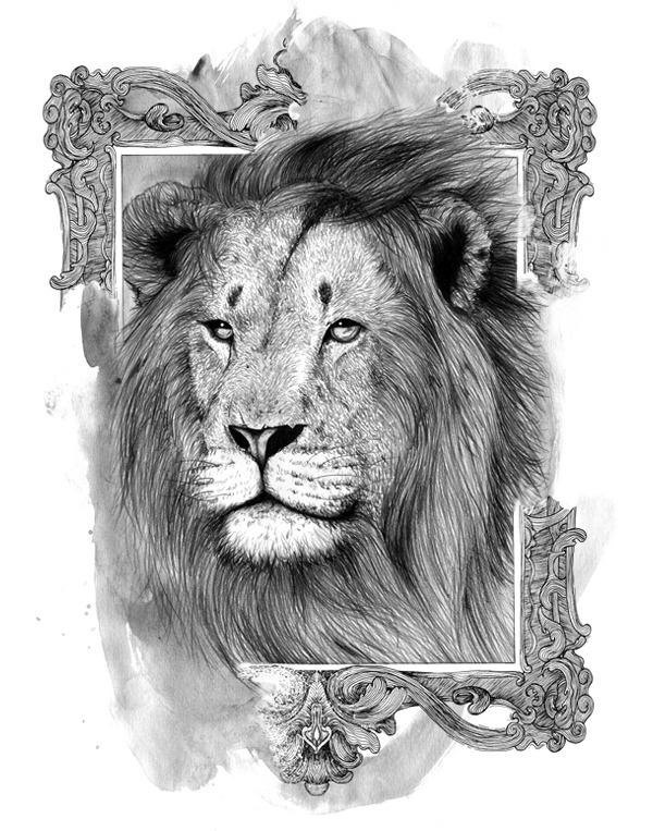 Drawing Lion Alexandre Black Illustration