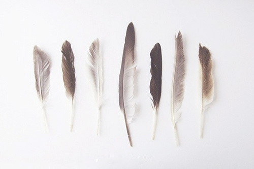 Im So Normal #feathers
