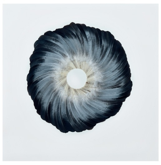 Kate MccGwire | www.katemccgwire.com | Work - 2011 #mccgwire #wings #feathers #photography #pigeon #circle #kate