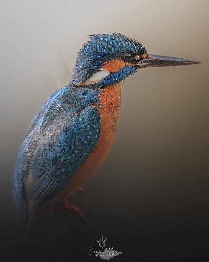 #birds_adored: Wonderful Birds Photography by Diego Maffina