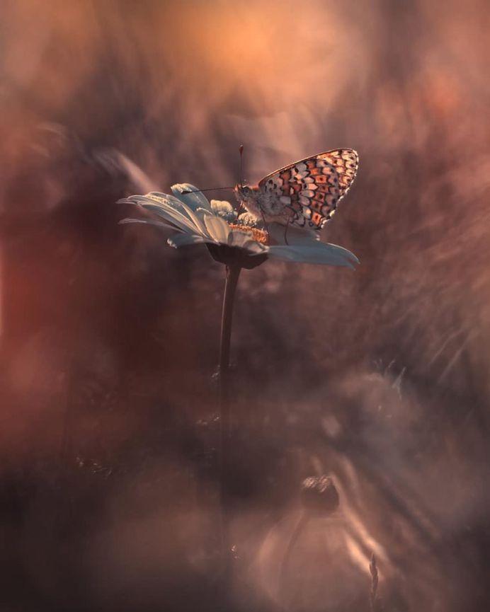 #flowerstagram: Wonderful Flower Photography by Fabien Bravin