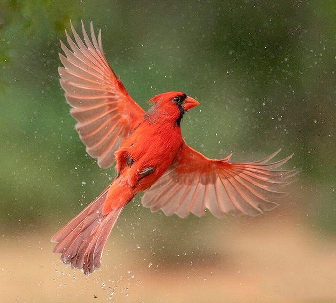 #bird_brilliance: Fascinating Bird Photography by Hector Astorga