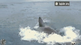 Didn't see that coming #dive #gif #shark