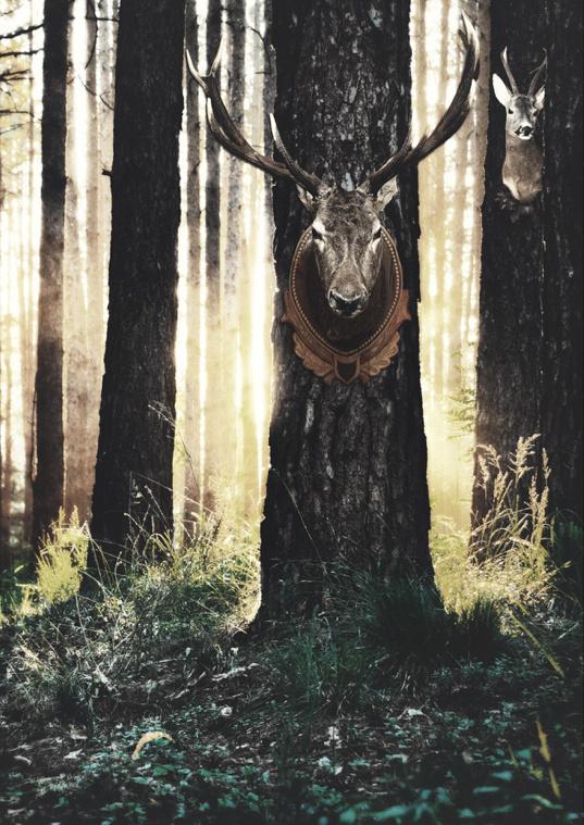 deer horns in the forest #die #sun #deer #tree #grass #autumn #sunrise #dead #forest #animal #life #walk