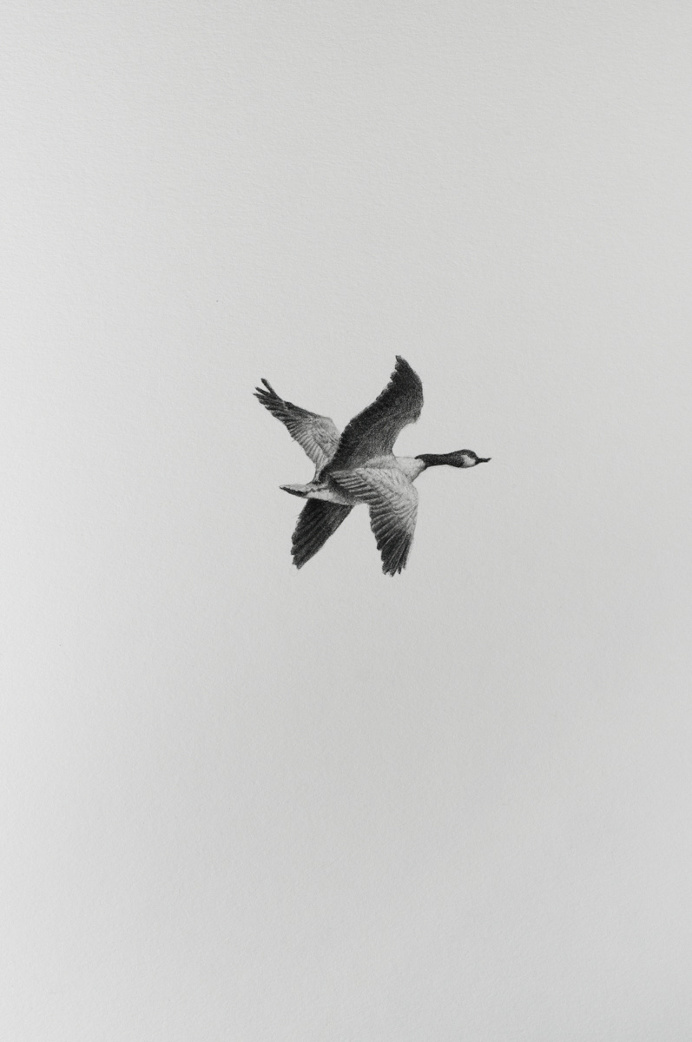 ANIMAL / MACHINE – X-wing