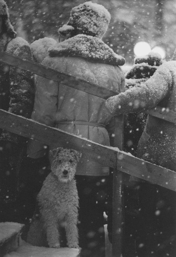 Soviet Life. | Flickr Photo Sharing! #photography #white #winter #snow #black and white #dog #life #soviet