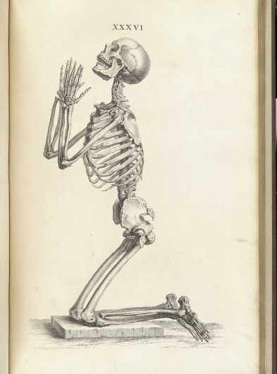 cheselden_t36.jpg 1200×1615 pixels #prayer #skeleton #anatomy