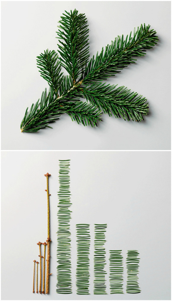 Pine Leaves by Ursus Wehrli #infographics #photo #science #funny #datavis #ursus wehrli
