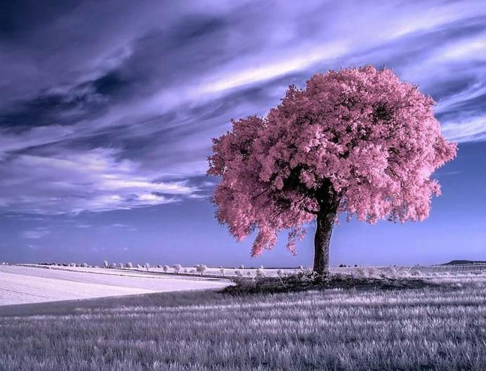 Beautiful Infrared Landscape Photography by Marta Borreguero