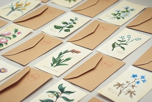 still shivering #botanic #illustrations #letter #envelope #flower