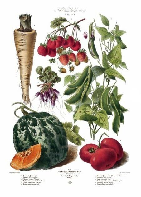 AvVsbIbCIAAfPTu.png (452×633) #veg #fruit #taschen